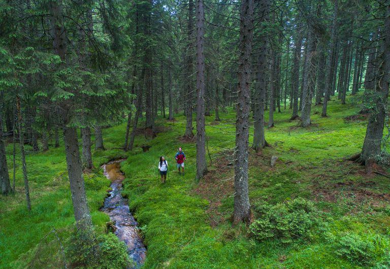 Pohorje_gozdovi_jost_gantar_photo2